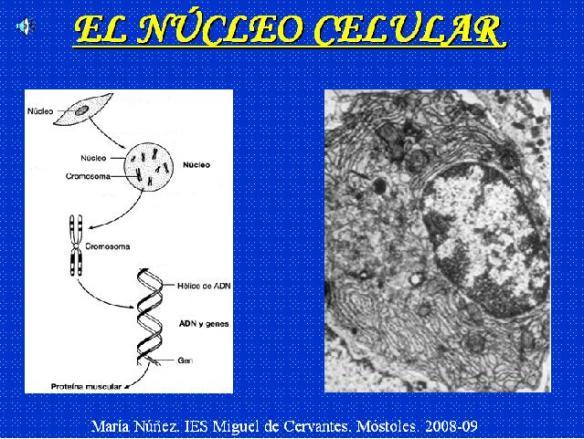 la-celula-eucariota-nucleo-division-celular